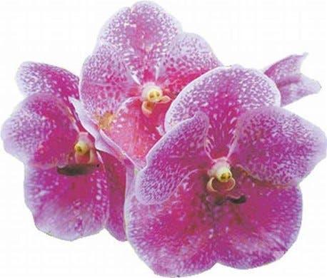 http://hoy.com.do/image/article/208/460x390/0/0A63A19A-E483-4DCD-8912-36B3190082C1.jpeg