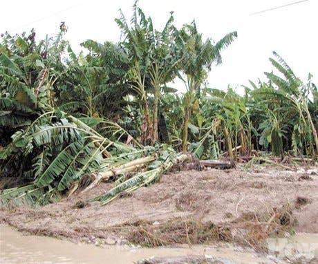 Daños a carreteras afectan productores