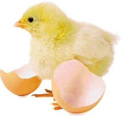 Secretos revelados sobre la carne de aves