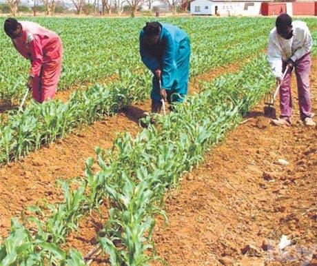 PRD califica pobres y complejas las medidas sector agropecuario