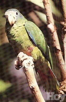 Prohibe cacería aves y mamíferos