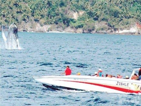Samaná, el cálido santuario de las ballenas jorobazas