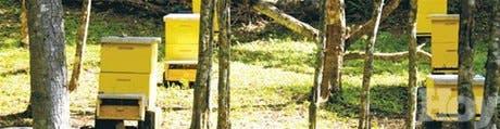Potencial para las abejas