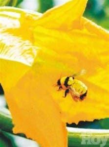 http://hoy.com.do/image/article/484/460x390/0/6A605EF1-3ED0-4F6C-B32F-931D5BA652DA.jpeg