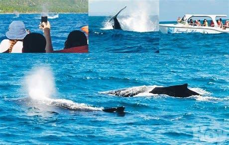 Las ballenas jorobadas, ahora vistas desde tierra