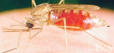 En lo que va de año se registran 217 casos de malaria