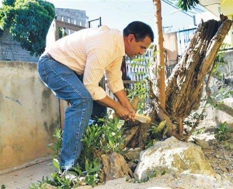 Fomentan cultivo de plantas aromáticas y medicinales