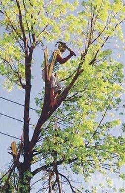 Soeci se queja uso árboles en campaña electoral