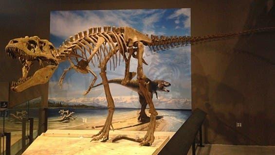 Los dinosaurios vivían en manadas