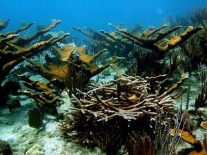 Expertos en corales se reúnen en Islas Vírgenes