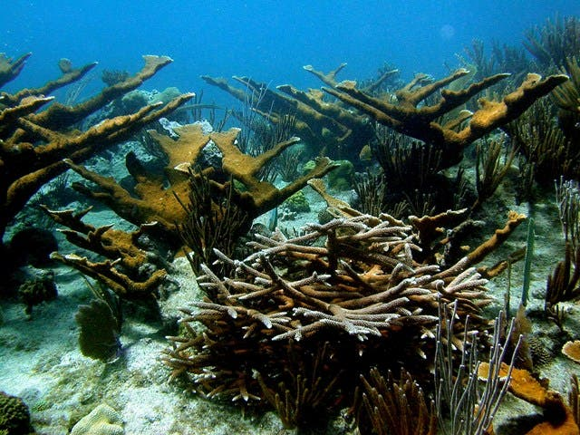Costa Rica y República Dominicana impulsan conservación de arrecifes de coral
