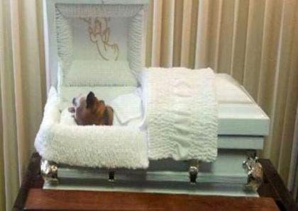 perro-velado-en-funeraria
