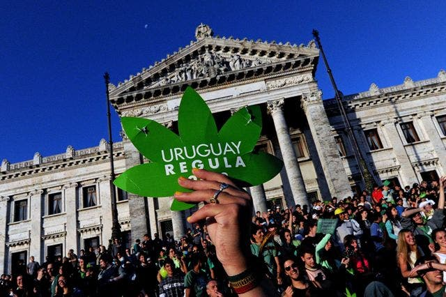 Uruguay aprobó legalizar marihuana.