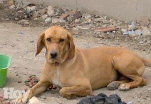 País con alta incidencia en mordedura de perros
