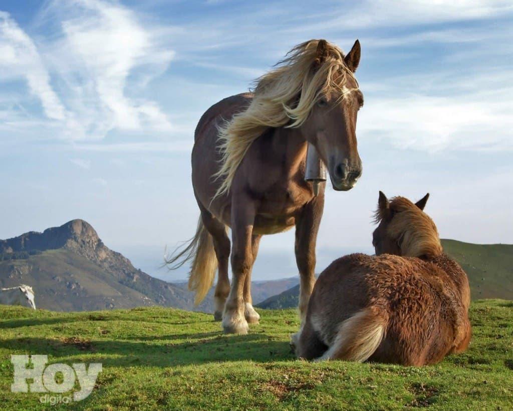 dificultad para orinar con el caballo