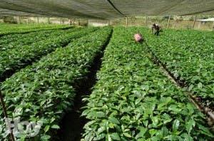 Científicos advierten del riesgo de perder plantas usadas en medicina