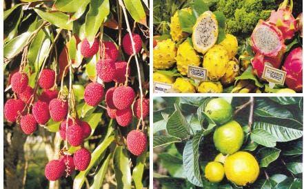 Agricultura fomenta cultivos de alto valor para la exportación