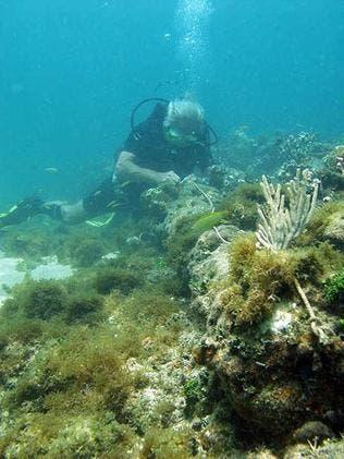 Gobierno RD sigue con interés supuesto hallazgo barco Colón