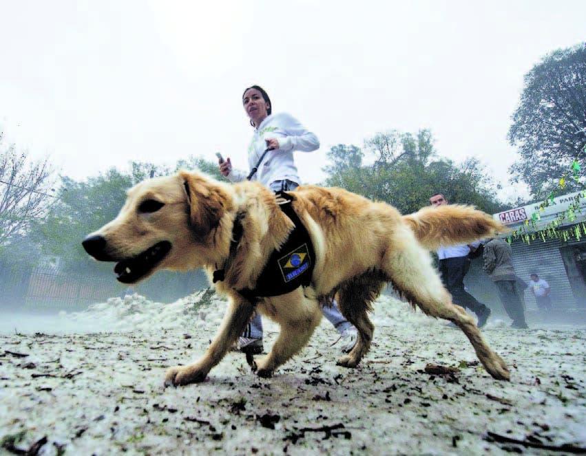 El hocico canino contiene 220 millones de células olfativas