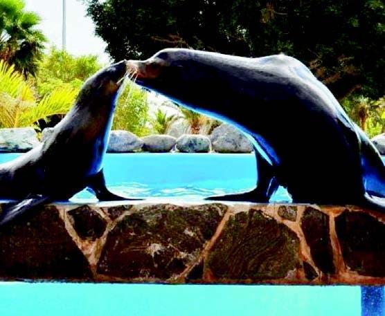 Los turistas están encantados con los leones marinos