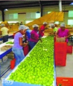 Preparan limón para exportación