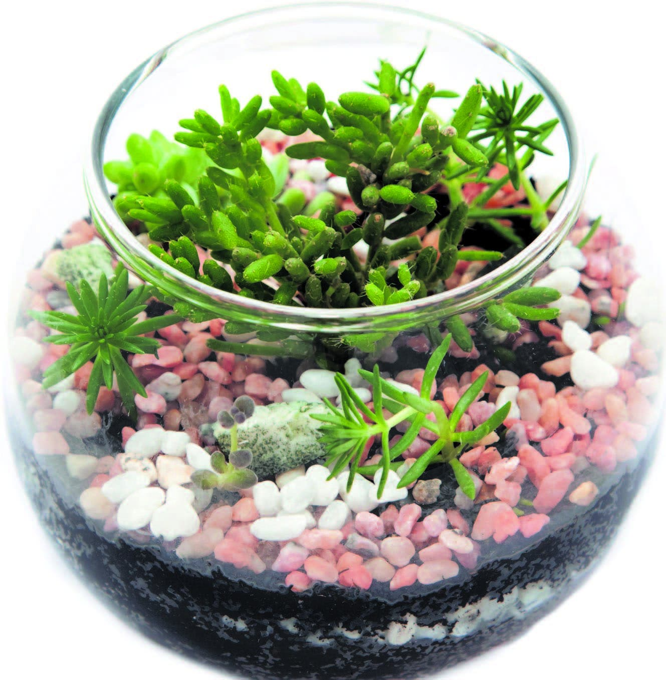 hoy digital terrario jardines en miniatura - Jardines En Miniatura