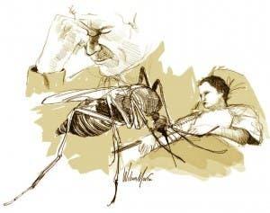Aedes Aegypti y la chikungunya