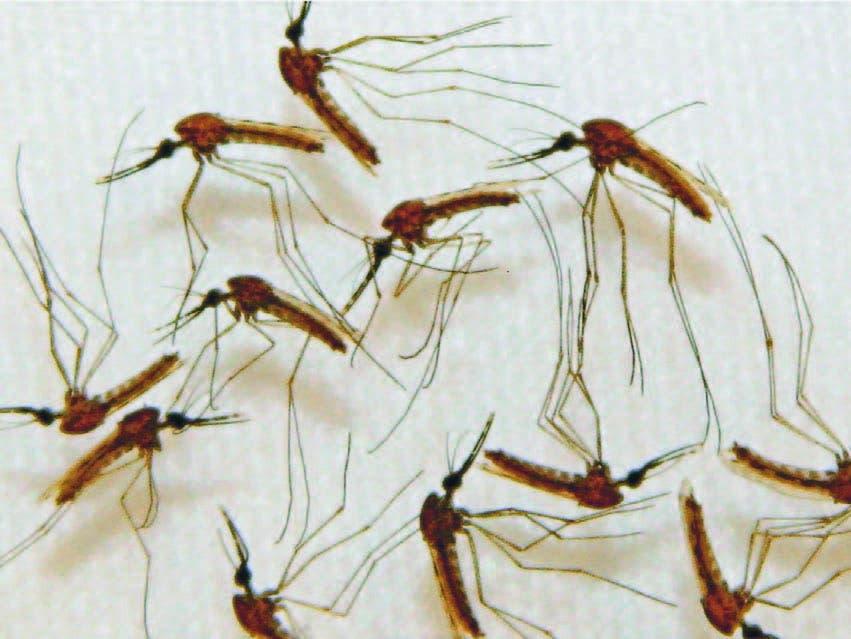 Confirman mil 200 casos del virus chikungunya en El Salvador