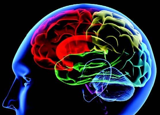 Un nuevo mapa del cerebro identifica 100 regiones desconocidas del córtex