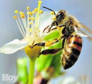 Belleza (+) Salud. Veneno de abejas, pura vida para la piel