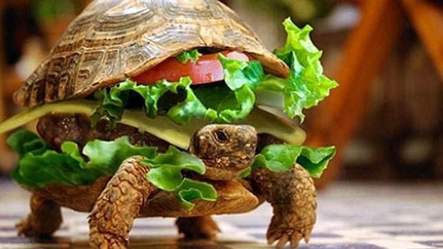 Disfraza a su tortuga de hamburguesa para colarla en un avión