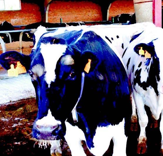 Avanza proyecto de trazabilidad del ganado bovino
