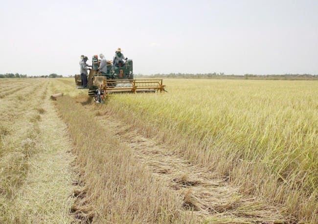 La agricultura sufre una cuarta parte de daños causados por desastres, según FAO