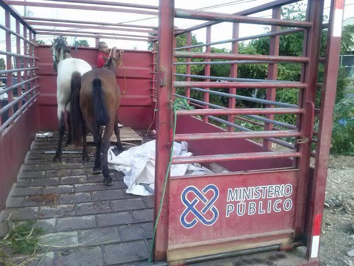 Unidad Protección de Animales realiza operativo en Autovía del Nordeste en prevención accidentes