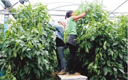 Piden PE subsidie fletes frutas y vegetales a nuevos mercados
