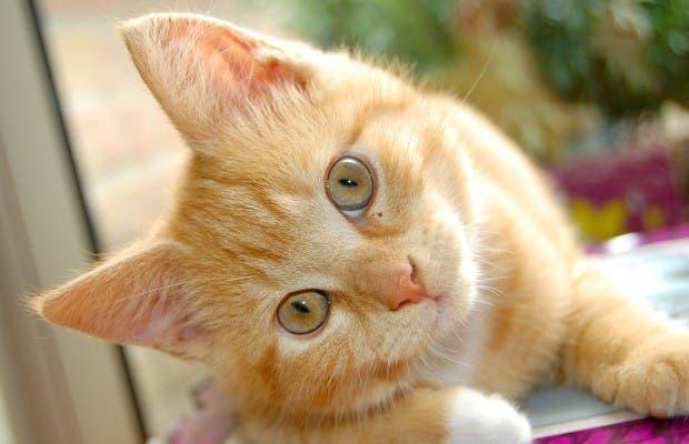 Día Internacional del Gato: Conoce su origen