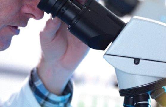 Saber + de ciencia.  Científicos logran regenerar células nerviosas con células híbridas