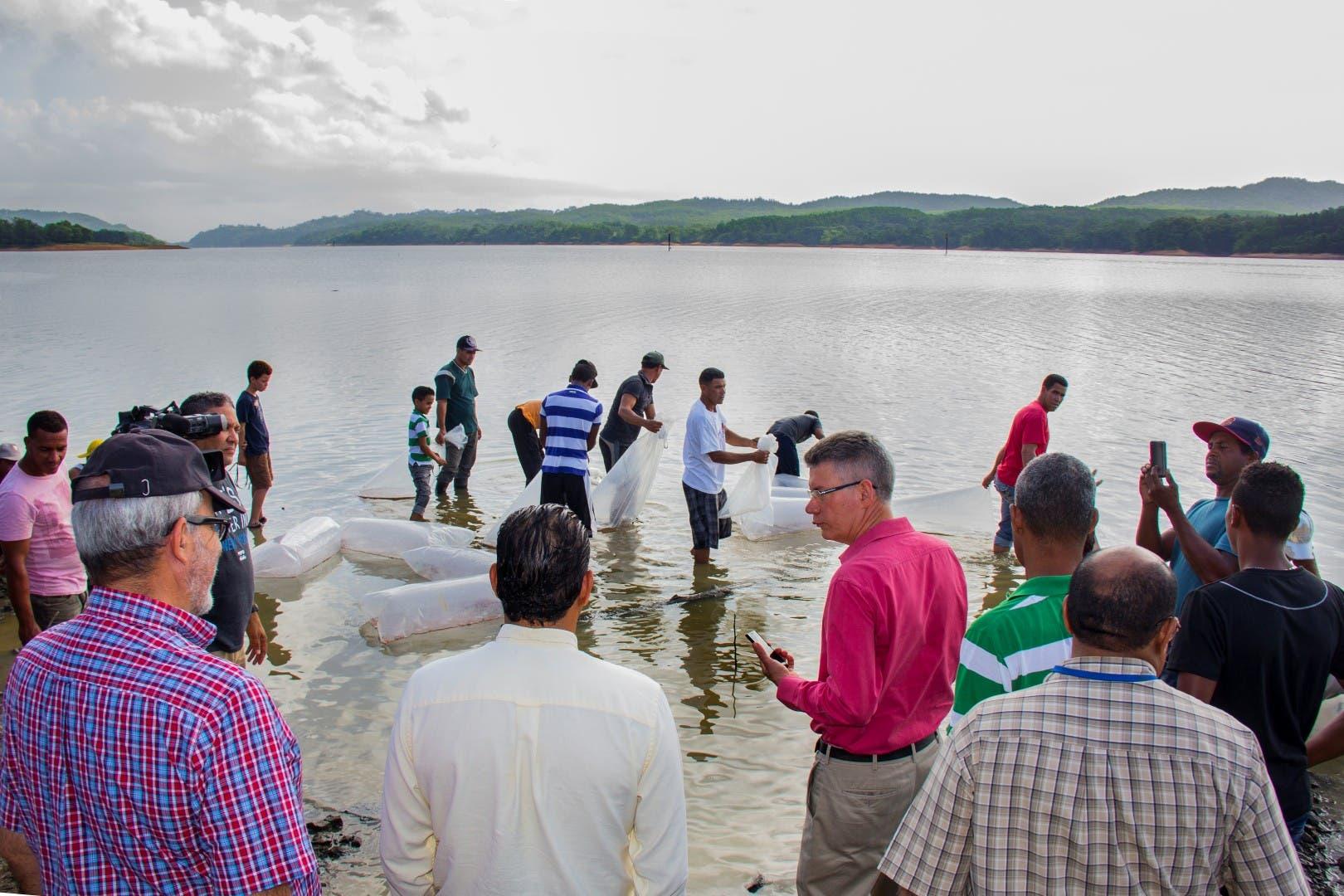 Falcondo, Codopesca, y universidad ISA liberan 50 mil peces en la presa de Rincón