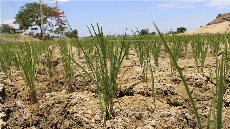 Honduras al borde de una hambruna por una severa sequía