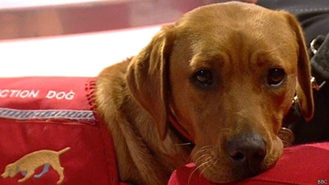 Cuando tú sientes estrés, tu perro también lo siente