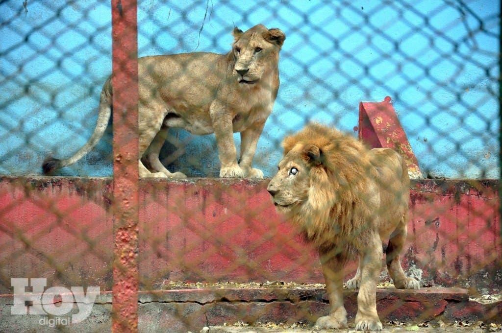 MOCA.- El parque zoológico de esta ciudad esta en completo estado de deterioro y abandono por parte de las autoridades, dejando a los animales mal cuidados y el medio ambiente destruido.              HOY              Rafael Vargas Molina