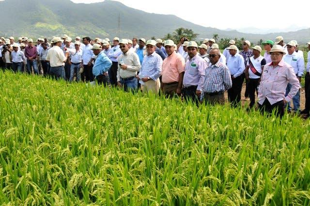ProCompetencia envía advertencia a productores de arroz