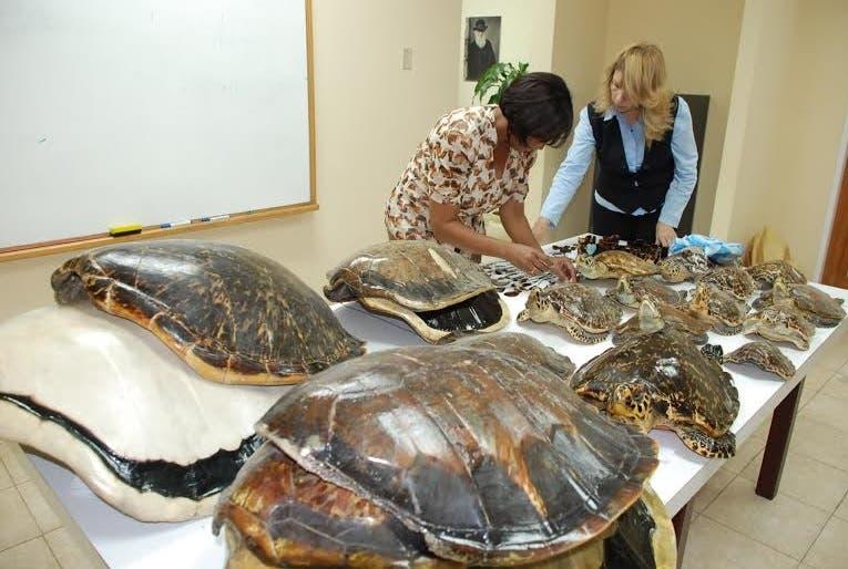 Medio Ambiente pide el cese en venta accesorios de concha de tortuga Carey