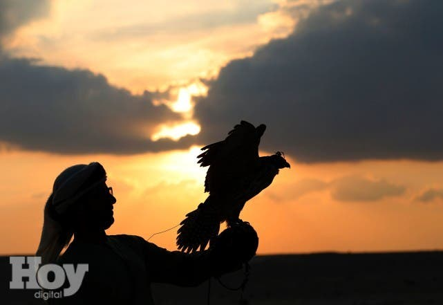 An Emirati falconer releases a hunting falcon at Al-Marzoom Hunting reserve, 150kms west of Abu Dhabi in the United Arab Emirates on February 2, 2016.  / AFP / KARIM SAHIB