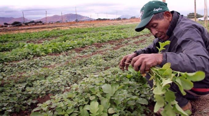 Agricultores mexicanos