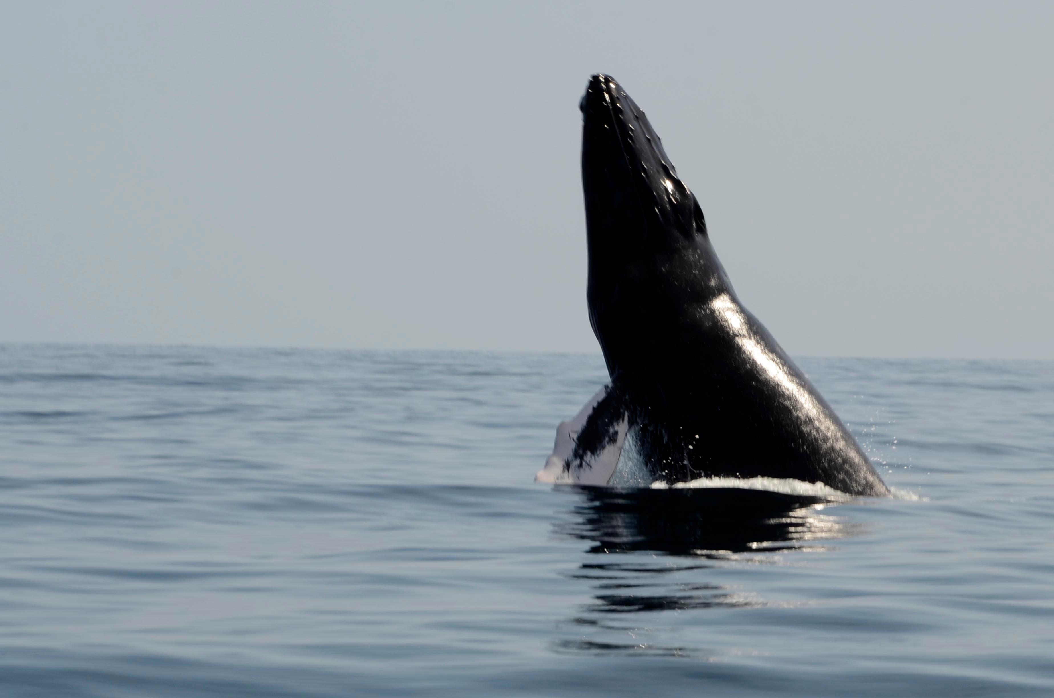 Observatorio de ballenas en la bahia de Samaná