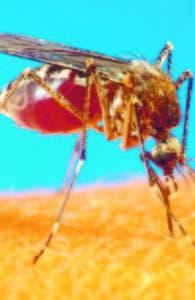 Estudio indica que toda la población de RD y Haití podría padecer zika