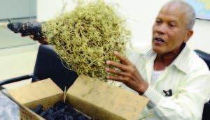 Procurador denuncia que haitianos talan árboles