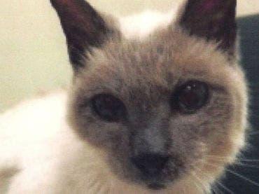 Muere a los 30 años Scooter, el gato más viejo del mundo