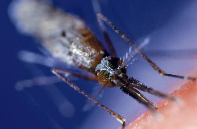 Malaria en RD